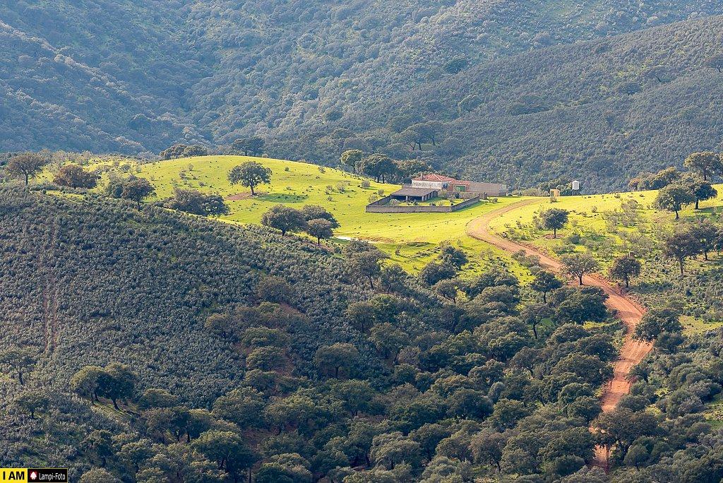 Extremadura, Cáceres, Monfrague, Dehesa