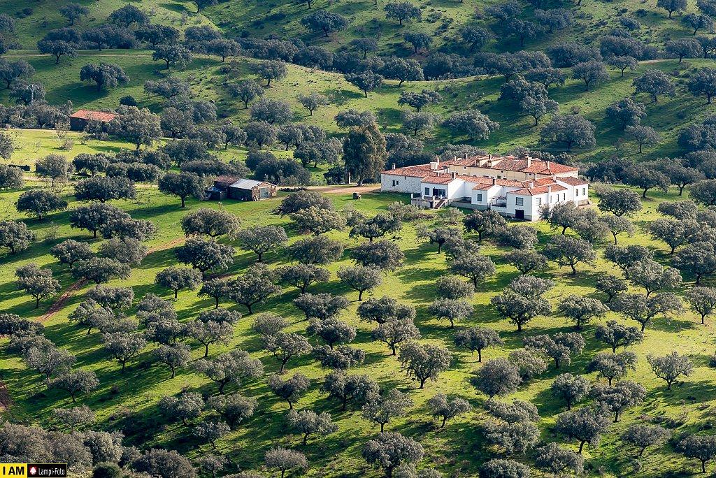 Extremadura, Cáceres, Monfragüe, Dehesa