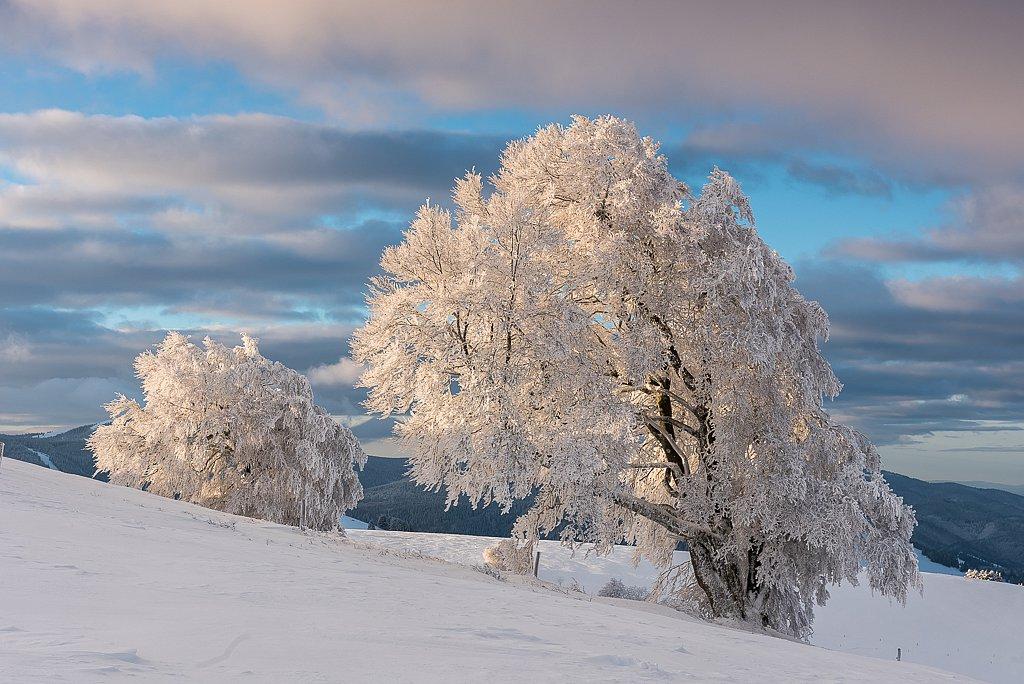 Schauinsland, Wetterbuchen